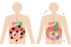 腸内細菌検査 やり方